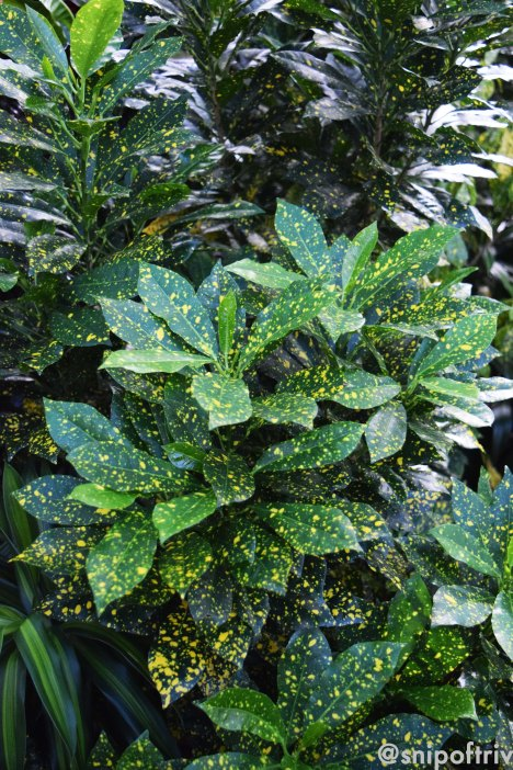 dotty foliage