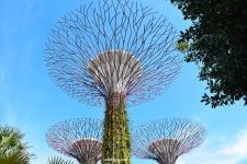 supergroovetree
