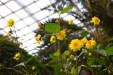 yellowwflower